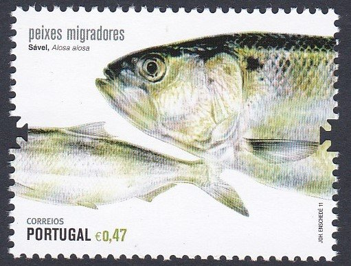 Stamp of Portugal 2011 Patrimonio Ambiental - Savel, Sardines. Peixes Migradores Sadly there is only 1 stamp of this 2 stamp set. Where the other one has got to-GOK.