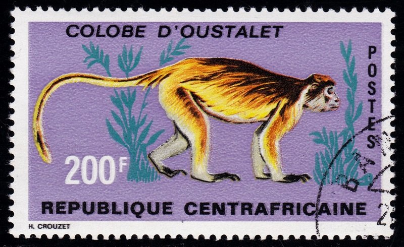 Central African 1971 Prosimians 5a.jpg