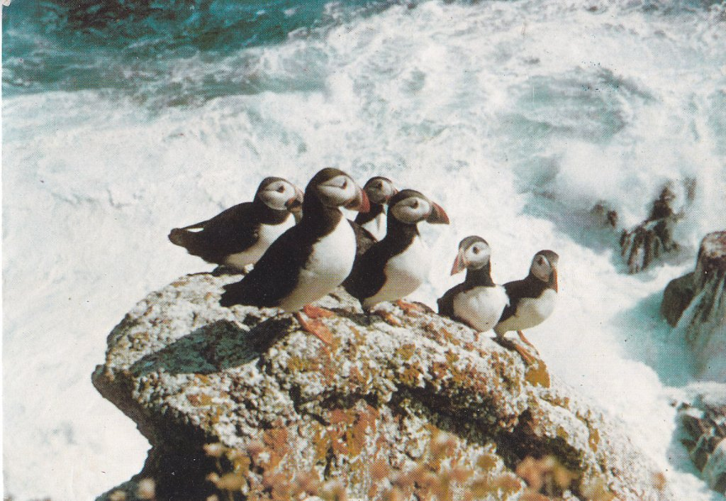 A Puffin or six