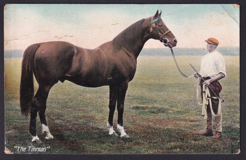 The Tinman, thoroughbred stallion owned by A Knowles Esq.