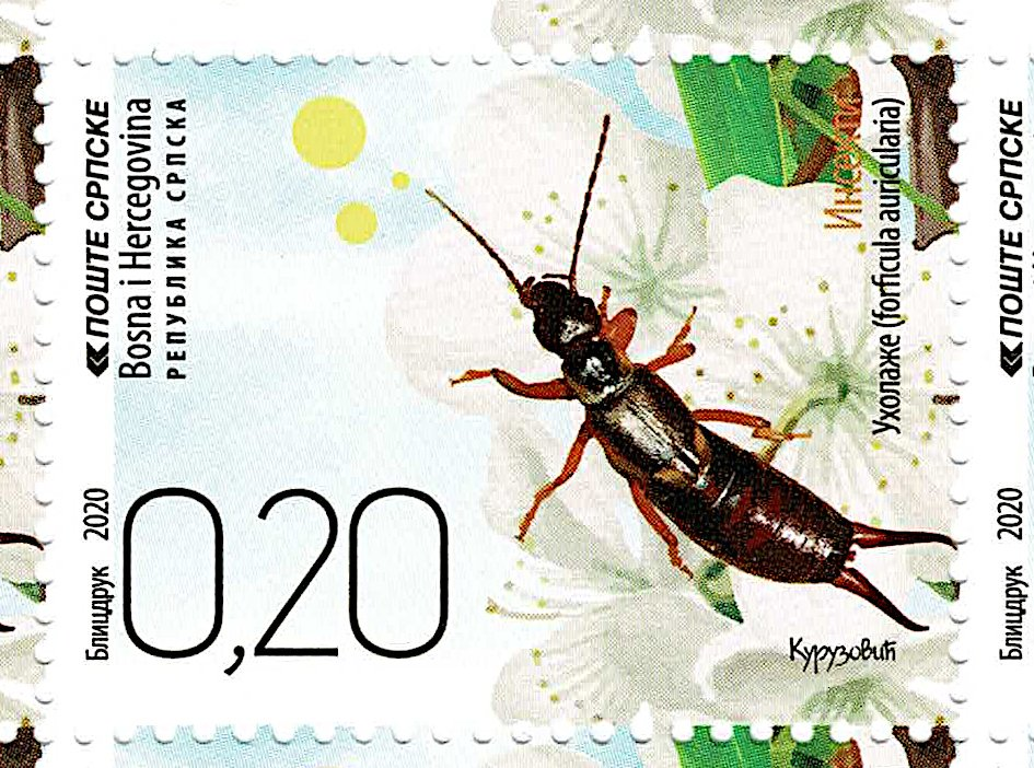 Bosnia and Herzegovina - Republika Srpska - Oct 2020 Insects - #830 0.20BAM Earwig